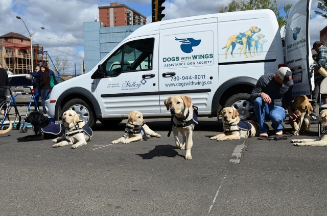 Assistance Dogs and Van