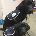 Black Assistance Dogs