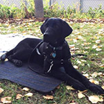 Black Dog on Mat