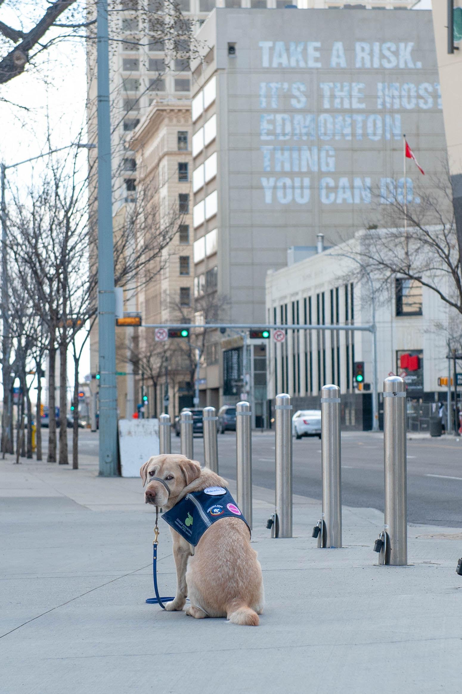DWW Knut-Take a Risk-Edmonton
